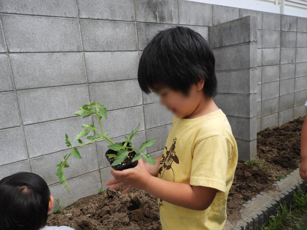 こぐま保育園 苗植え付け(そら)