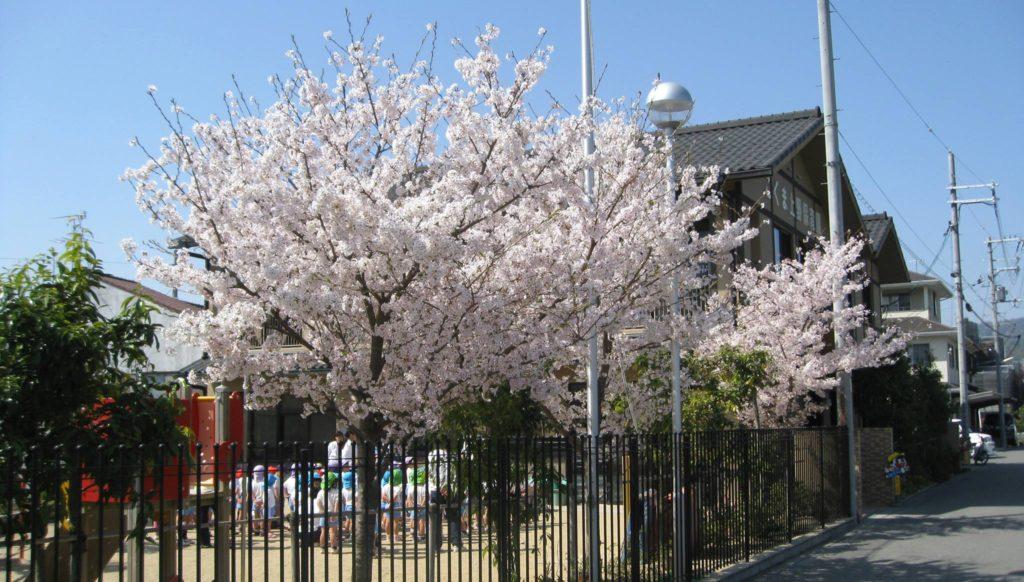 こぐま上野保育園のホームページが新しくなりました