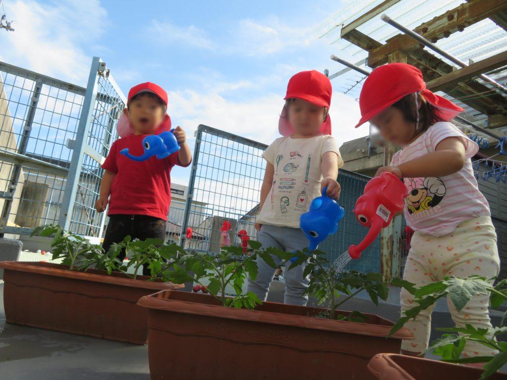 園庭の畑で栽培